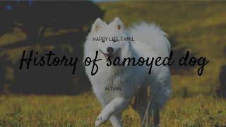 SAMOYED DOG BREED | Tamil |#12 Happy life tamil.