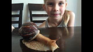 Пробуждение улитки АХАТИНЫ после зимней спячки #Snail Achatina#Уход и размножение улиток
