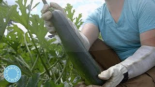 When to Harvest Zucchini in a Vegetable Garden - Martha Stewart