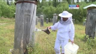 Ноу-хау в пчеловодстве: волшебный улей(http://t7-inform.ru/s/videonews/20160815125350 Заселил пчел в улей, а после этого поднес банку к специальному сливу и все – проду..., 2016-08-15T08:09:08.000Z)