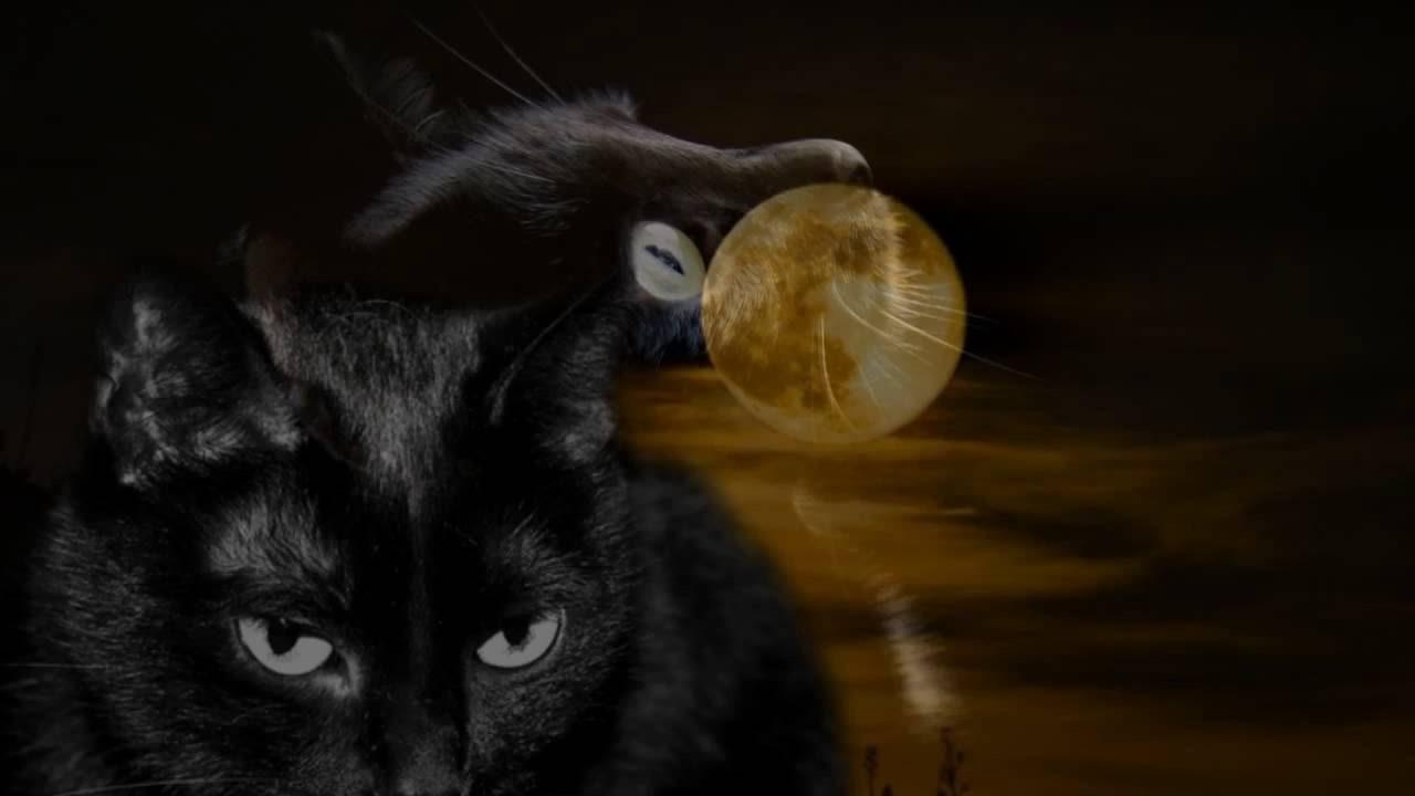 černá kočička