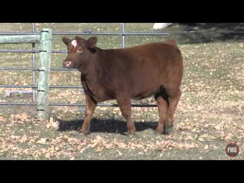 Polzin Cattle 2014 Savannah Broker