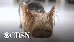 More Hill's dog food recalled over vitamin D toxicity concerns