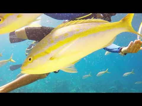 Bubble Sub Paradise Island Bahamas Pt2