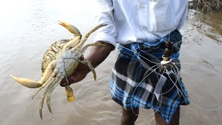 Unique Way of Mud Crabs Catching / Never Seen Before / Handline Crabs catch thumbnail