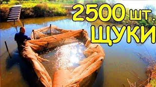 ЗАПУСКАЮ в ОЗЕРО 2500 штук ЩУКИ