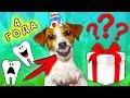 ДЖИНА ВЫБИЛА ЗУБЫ В ДЕНЬ РОЖДЕНИЯ | Elli Di Pets