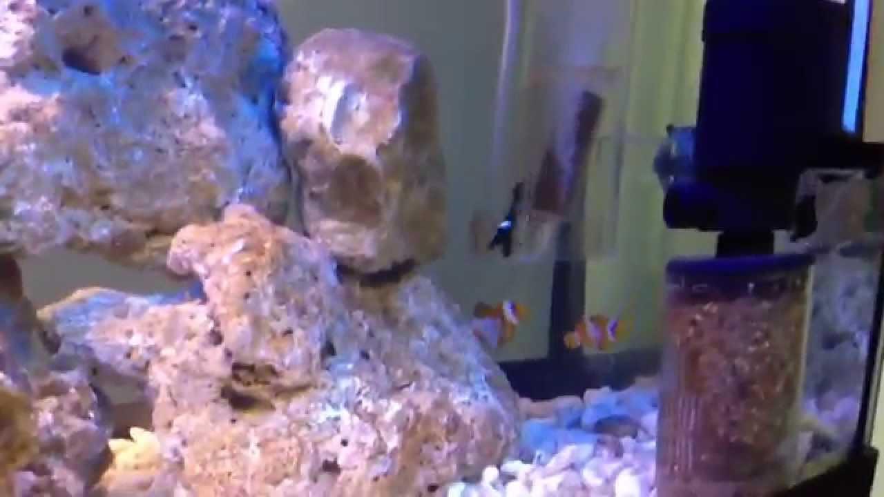 Il mio acquario marino barriera da 120 litri youtube for Acquario 120 litri