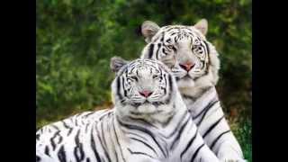 Давайте беречь природу и животных!