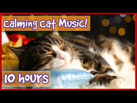 Calming Music For Cats! Soothe Your Cat With Soft Music and Help Them Relax! Reduce Stress & Anxiety