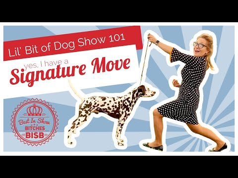 Dog Show 101 - Signature Move in Dog Show Conformation