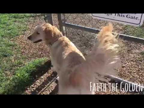 DogWood Dog Park - Jacksonville Florida