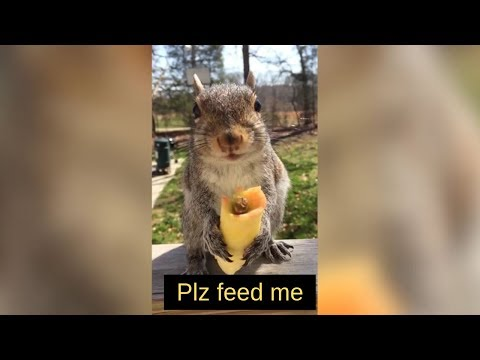 Stop Feeding Squirrels- Here's Why