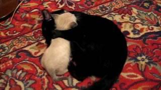 Кошки обучение и воспитание