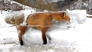 Flash Frozen Fox, Ice Clogs Hydro Dam & Vegetable Shortages Across Europe (293)