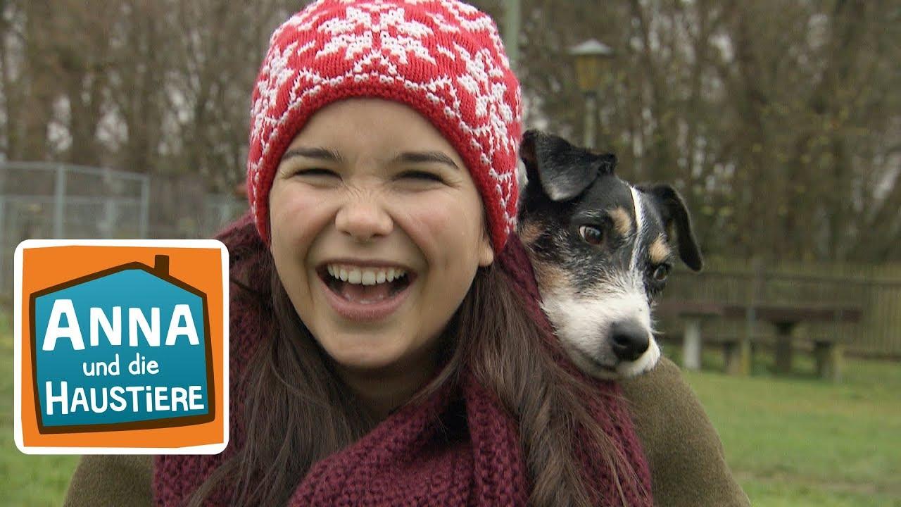 Hund Information Fur Kinder Anna Und Die Haustiere Youtube