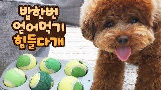 노즈워크 장난감 만들어줬다가 강아지랑 싸울뻔ㅠㅠ '내 사료 왜 숨겨!!'