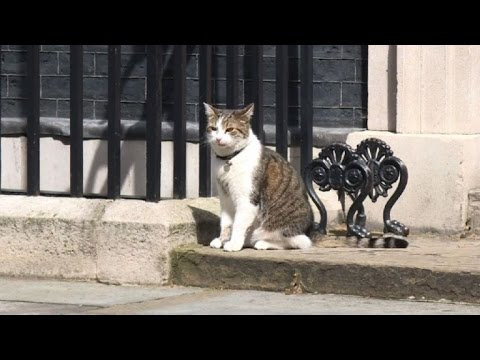 Larry the cat staying put in Downing Street