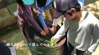 あぐりの丘で行われたお茶摘み体験の様子です。 お茶摘みから、釜炒りま...