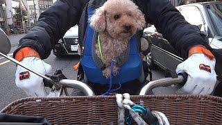 犬バイク2015 ~冬~  A Poodle And A Motorcycle In Winter 2015