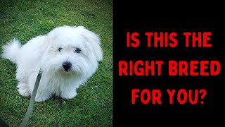 How We Discovered The Coton de Tulear Breed & Got Our First Coton!