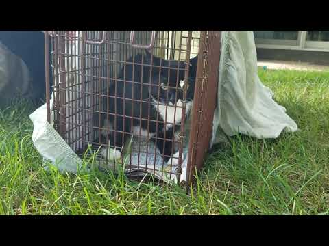My Backyard Pets: Release of the Kittens