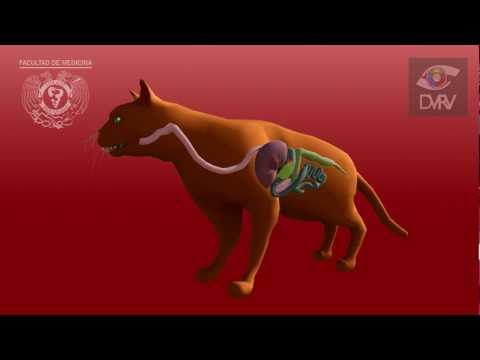 Ciclo biológico de Toxoplasma gondii