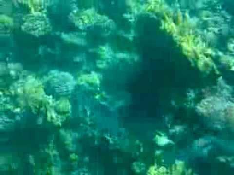 Seascope Sharm El Sheikh 19.10.2010 Part.1