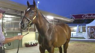 miRunners yearling to be trained by Kris Lees