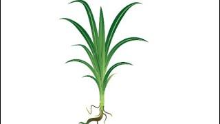 3 pemuda anak alfatoni buat lagu untuk perwira fatoni