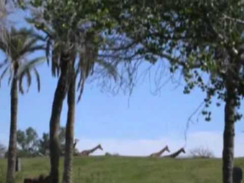 Grasslands of  Tropical region.flv