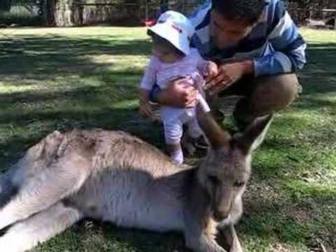 Emma at Lone Pine with a kangaroo.