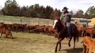 VanderMay Livestock - PC Speedy Native aka Cash dragging calves at a branding with Luke VanderMay