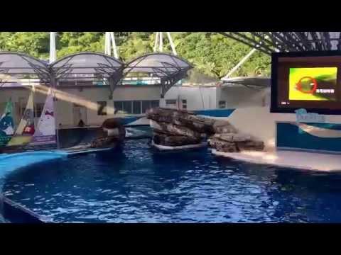 Atraksi lumba-lumba hualien - taiwan 2015 [HD]