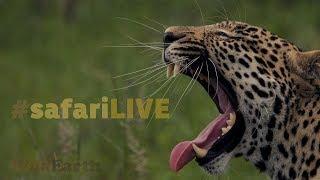 safariLIVE - Sunset Safari - Nov. 19, 2017 thumbnail