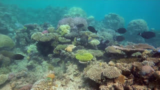 Keeping an eye on the Great Barrier Reef Thumbnail
