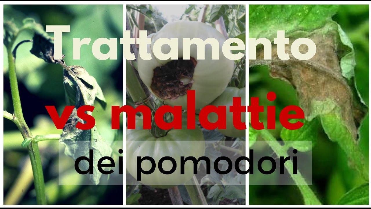 #mattthefarmer #orto #giardinaggio