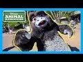 DISCOVERING ANIMAL KINGDOM'S BIGGEST HIDDEN SECRETS | Disney World Vlog 2018