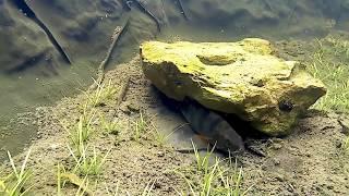 Фильтр для пруда своими руками. Как избавиться от водорослей  и сделать воду кристально чистой.