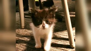 Adorable Kitten Selected to Join Police Department as Therapy Animal thumbnail