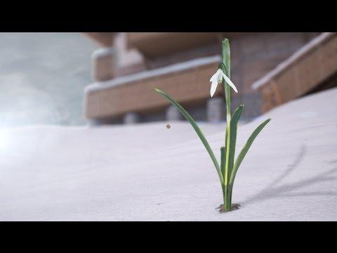 Пробуждение подснежника - 3D анимация - поздравление с 8 марта и приходом весны