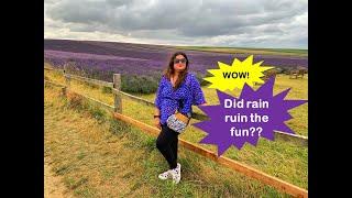 Hitchin Lavender field Visit