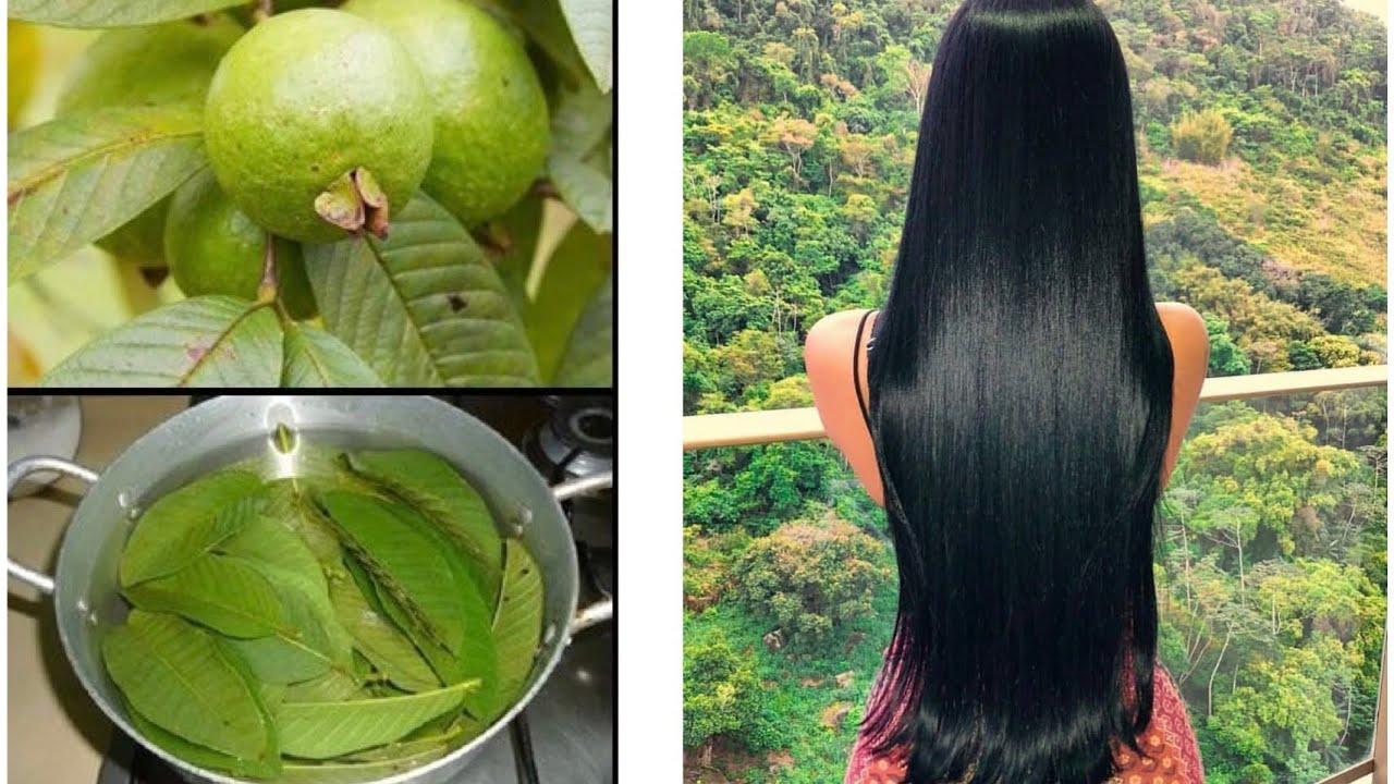 Agua de hojas de guayaba para el pelo