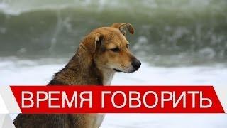 """""""Время говорить"""": про бездомных животных"""