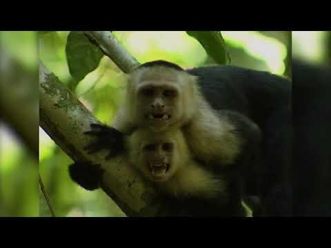 Wildest South America – Full Length Documentary!