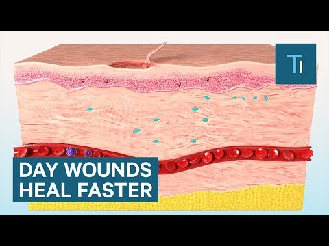 Why Skin Injuries Heal Faster During The Day