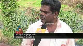 Strawberry farming destroyed in Idukki : Chuttuvattom News