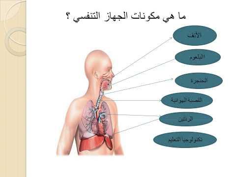ادرس عن الجهاز التنفسي