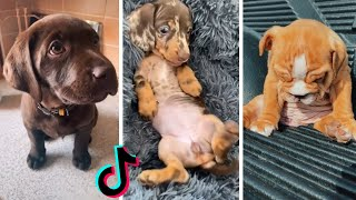 Most Adorable Puppies & Funniest Doggos Compilation
