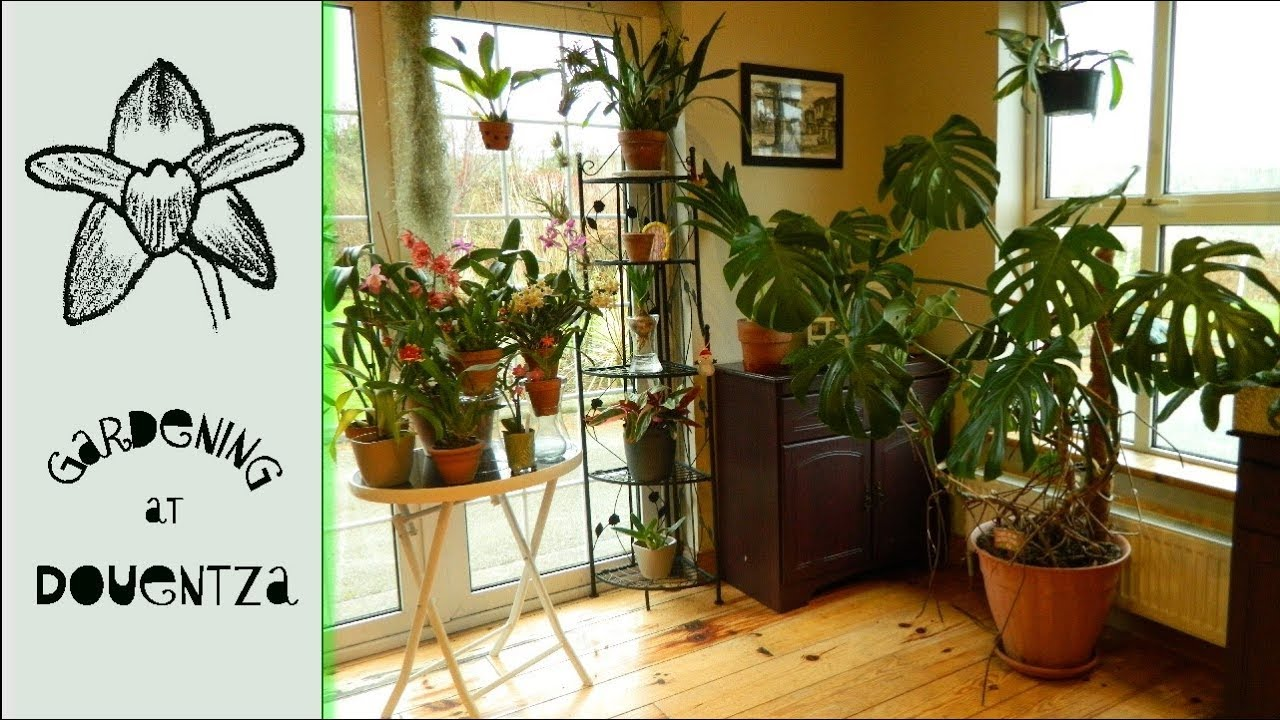 Winter House Plant Display Including Monstera Deliciosa